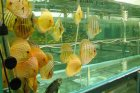 Řízení technologií vytápění velkoobchodu s akvarijními rybkami